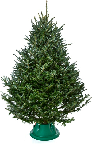 Christmas Tree Care and Safety Tips