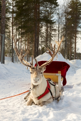 The history of Santa's reindeer